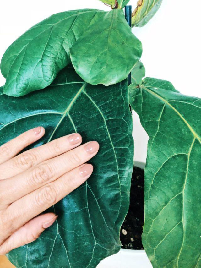 Big budget saver - DIY gel manicure at home diy