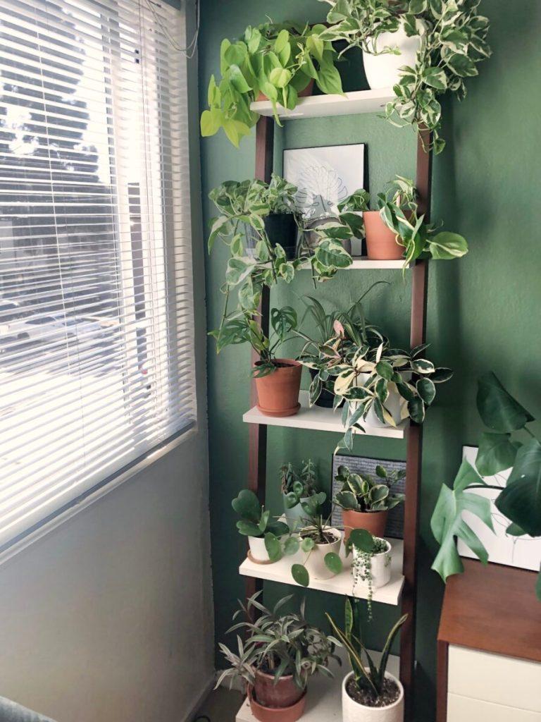plants_winter2