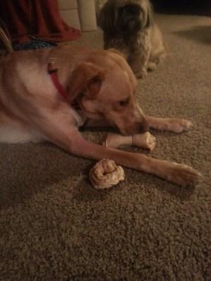 leo bones