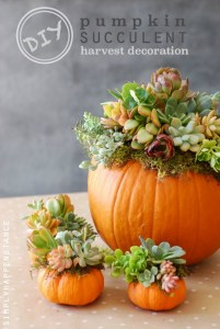 DIY-Pumpkin-Succulent-Harvest-Decoration-simplyhappenstance.com_