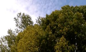 20141006XD-Improv-Treetopz(STILL_2)