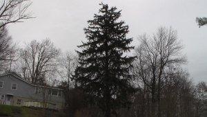 20141205XD-NeighborhoodShots (28)