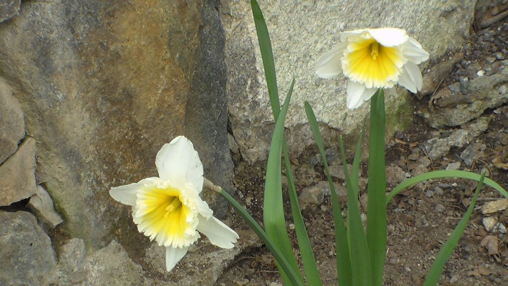 20150424XD-LawnFlowers (19)