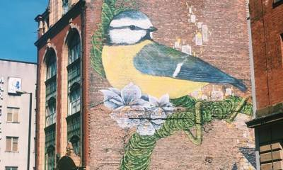 Image depicts a Blue Tit painted onto the side of a Manchester building