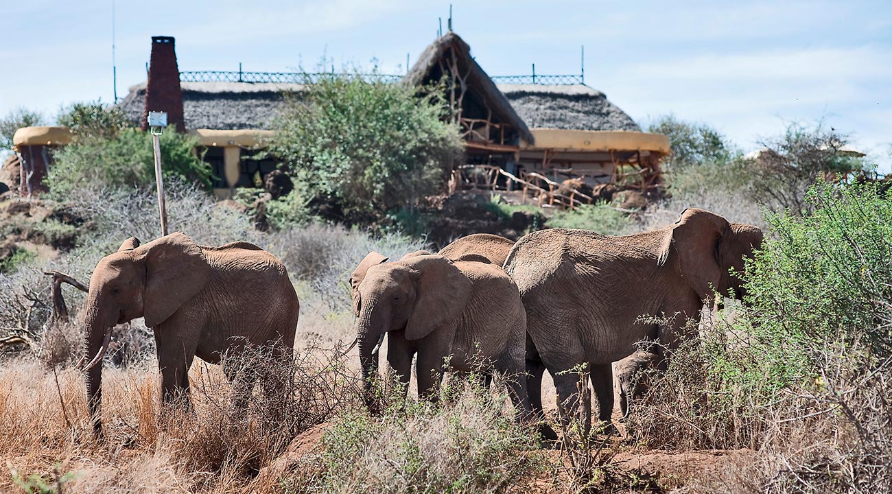 What you need to know before booking your stay at Sweetwaters Serena Camp
