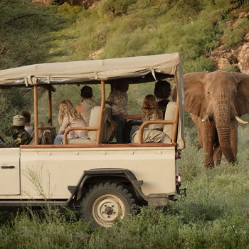 African Safaris Family Game Drive