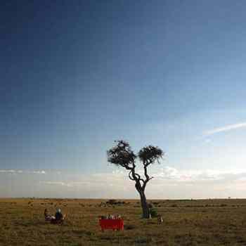 African Safari Game Views