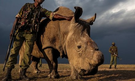 About – Brent Stirton