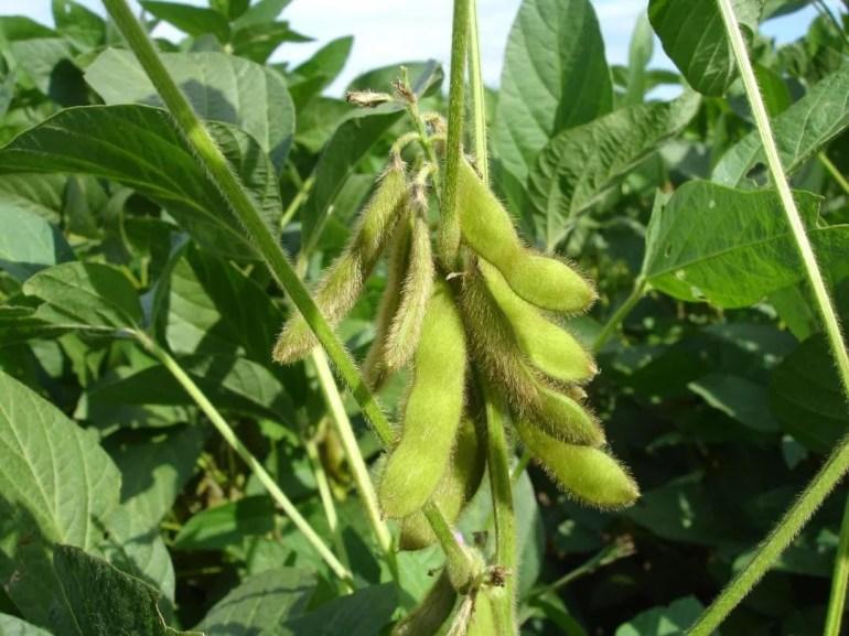 """绝望到只能求神?印度寺庙已经开始供奉""""新冠病毒女神"""""""