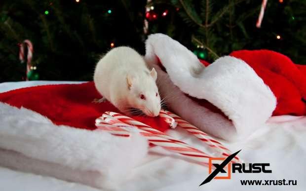 Какие опасности таит год Белой Крысы
