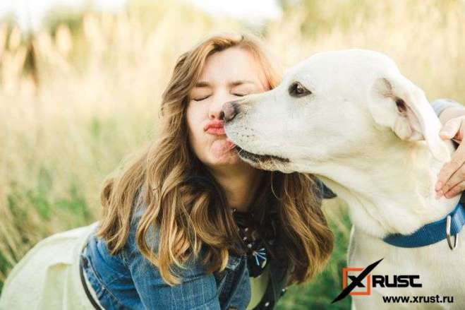 От чего зависит продолжительность жизни собак и людей