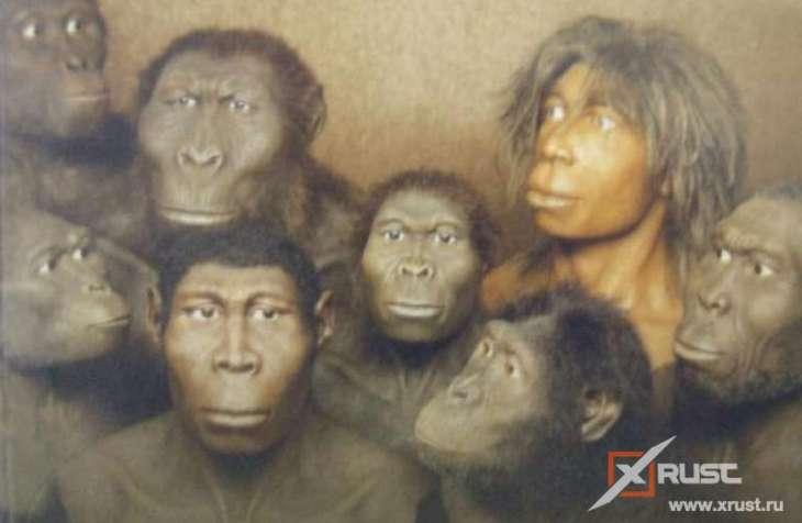 Человек и обезьяна – когда разошлись пути-дорожки