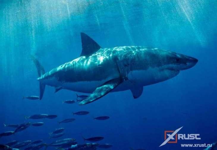 Акулы и магнитное поле Земли