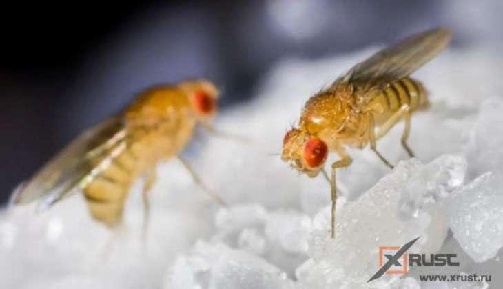 Человек и муха – мозги работают похоже