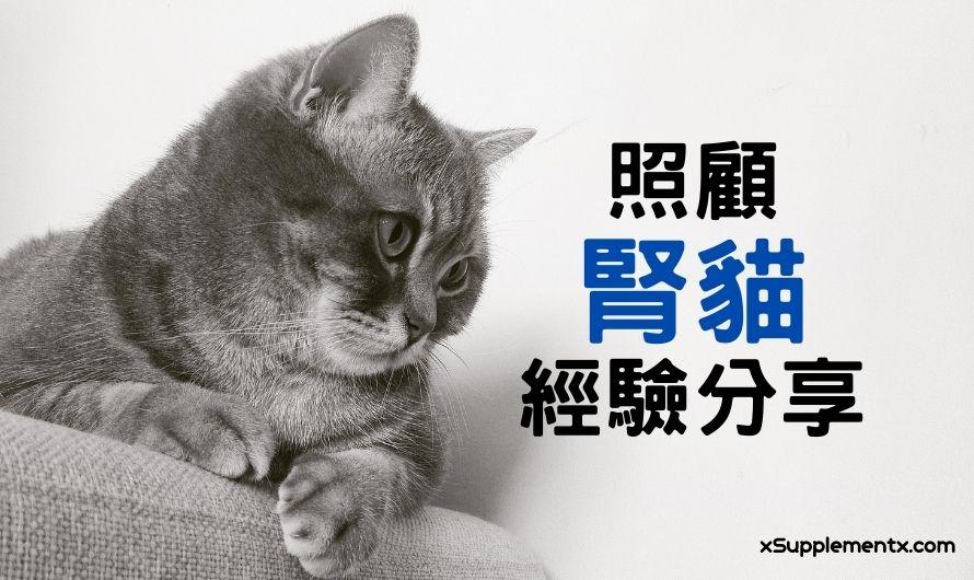 腎貓經驗分享