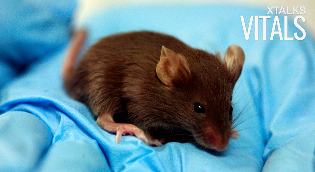 Lab-Grown Lungs Survive Transplant into Mice