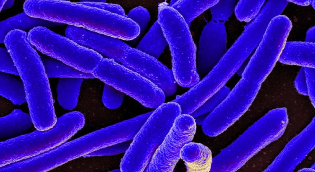 Bacteria Survive Antibiotic Assault Due To DNA Repair Mechanisms