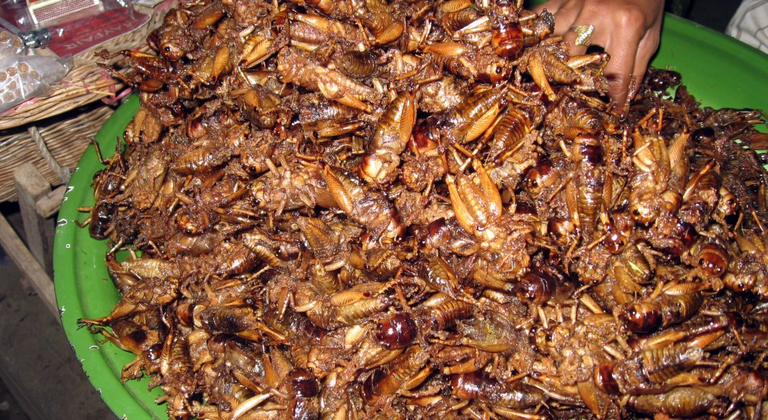 Are Insects the Next Big Trend in Sustainable Protein?
