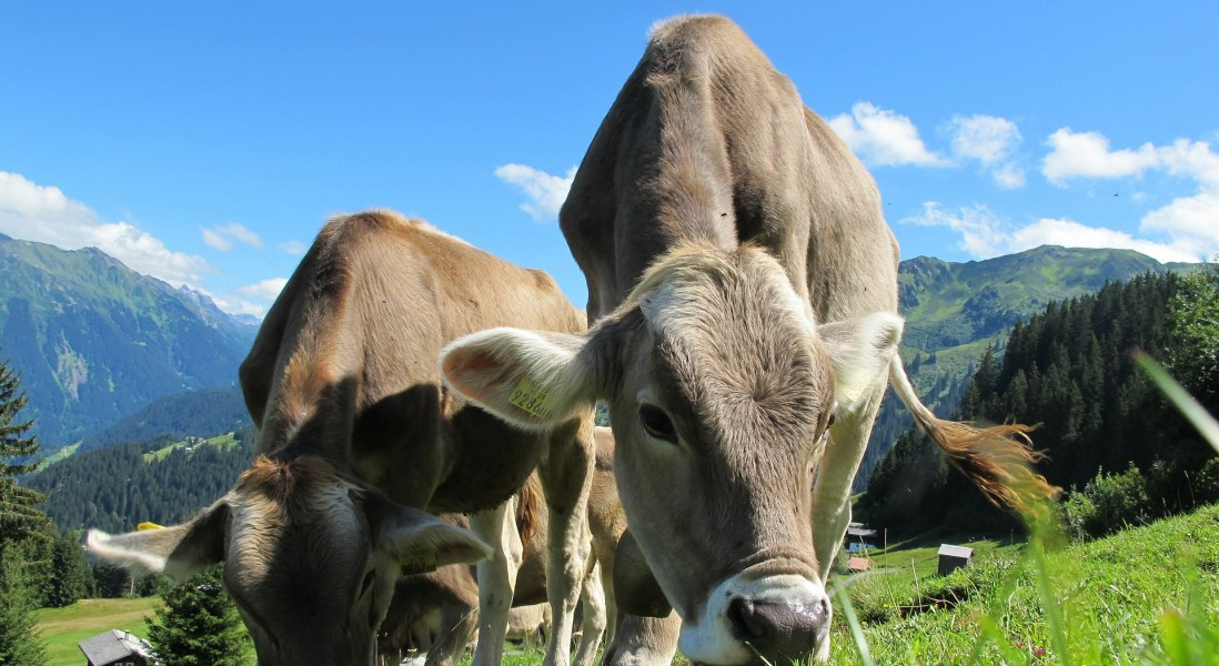 70 Percent of Food Companies with Animal Welfare Certified Products Have Seen an Increase in Sales