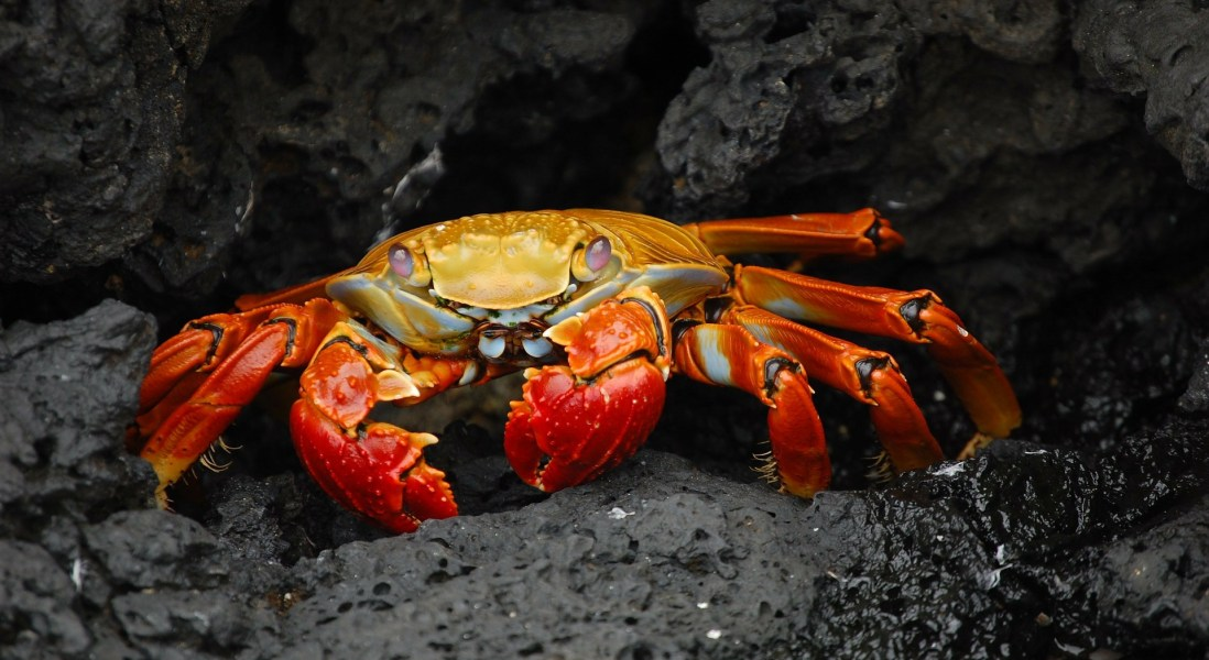 Crab Shells and Tree Fibers Create A Sustainable Plastic Alternative