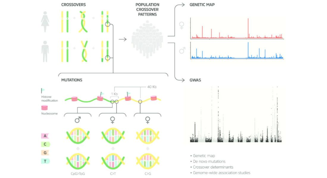 deCODE Genetics Unveils the Most High-Resolution Map of the Human Genome