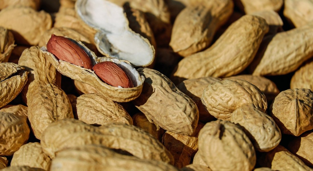 Aimmune Therapeutics' Peanut Allergy Drug Breaks Ground in Untapped Market