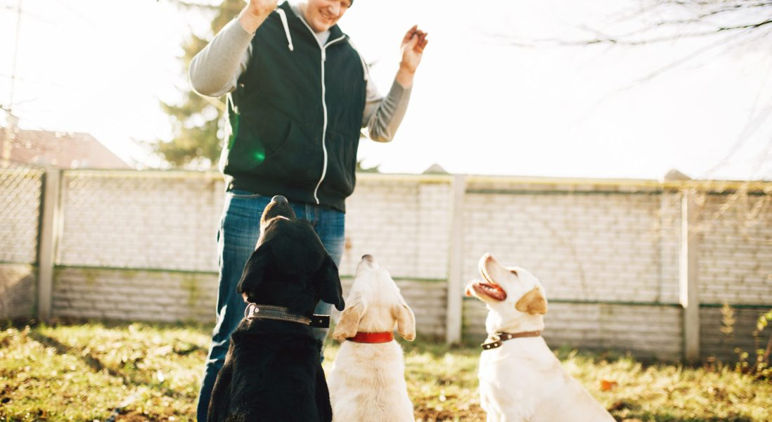 Can Dogs Identify COVID-19 Positive People?