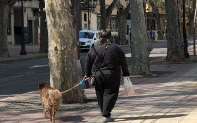 Xàtiva recomana als propietaris de gossos que eviten les zones desinfectades recentment
