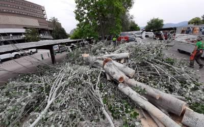 El DSXO tala diversos arbres de l'Hospital de Xàtiva
