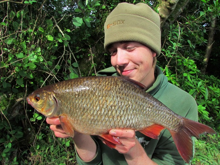 This massive roach of 2lb 13oz fell to the tactics described - a cage feeder and a small boilie