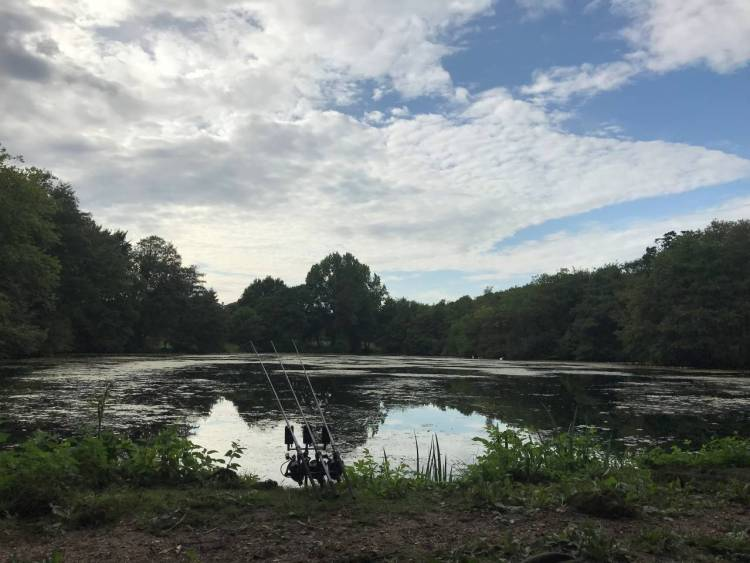 scenic of estate lake carping