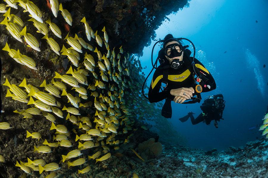 Scuba-Diving-Category