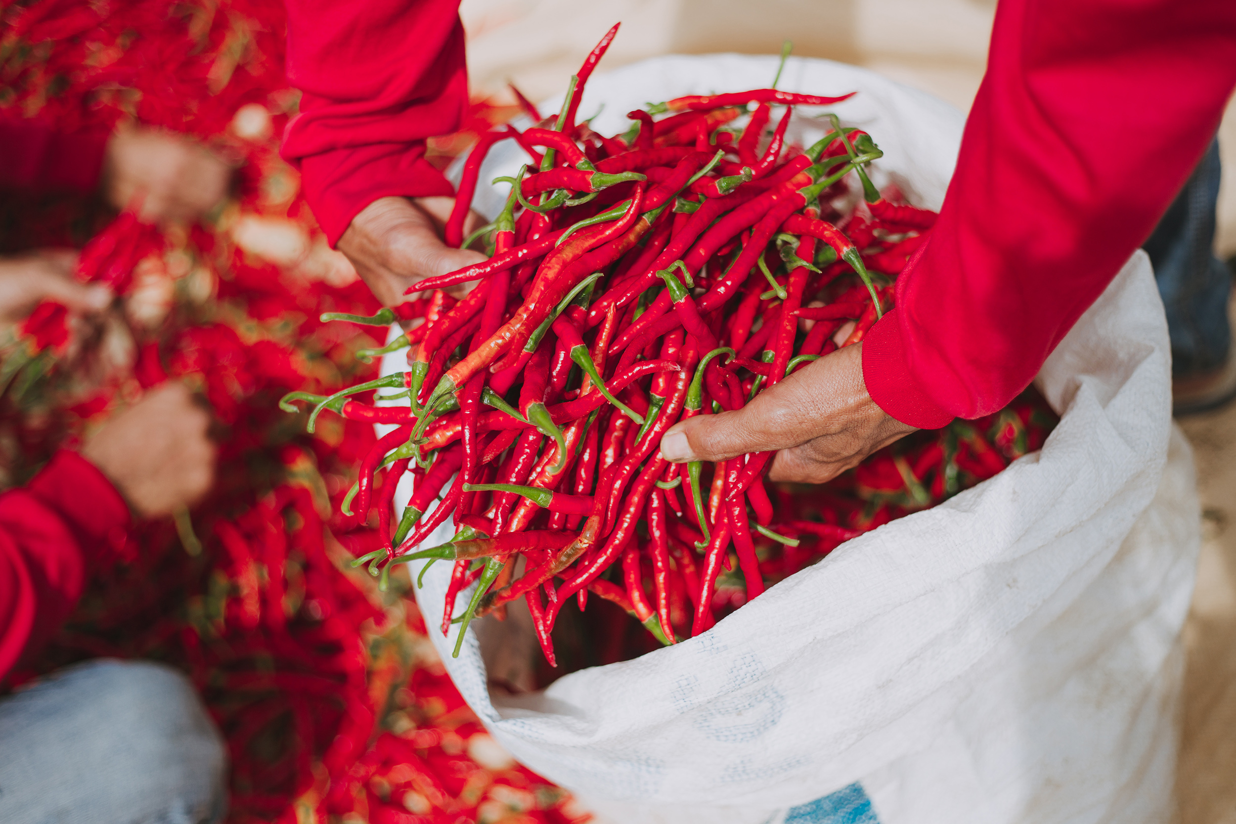 Farming Spicy Swap Fees With SPI