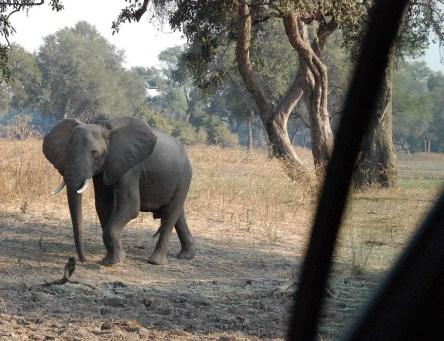 Vakantie_Zambia_100719_0088-9