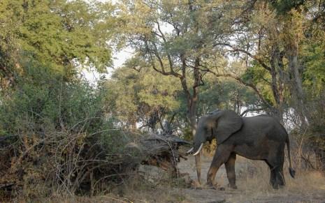 Vakantie_Zambia_100719_0098-10