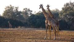 Vakantie_Zambia_100719_0109-11