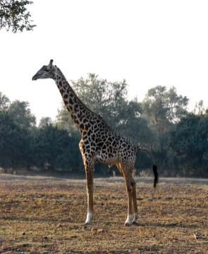 Vakantie_Zambia_100719_0112-12
