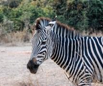 Vakantie_Zambia_100719_0128-15