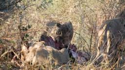 Vakantie_Zambia_110719_0189-18