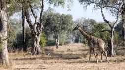 Vakantie_Zambia_110719_0214-25