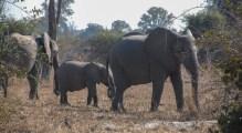 Vakantie_Zambia_110719_0242-31