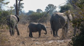 Vakantie_Zambia_110719_0243-32