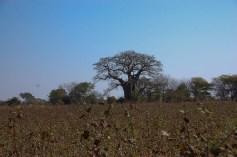 Vakantie_Zambia_130719_0287-42