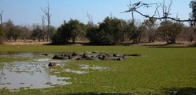 Vakantie_Zambia_140719_0390-67
