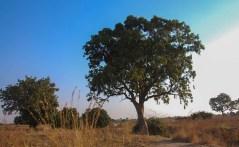 Vakantie_Zambia_140719_0426-74