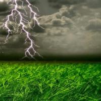 Why Plants Need Nitrogen: Nitrogen Guide Part I