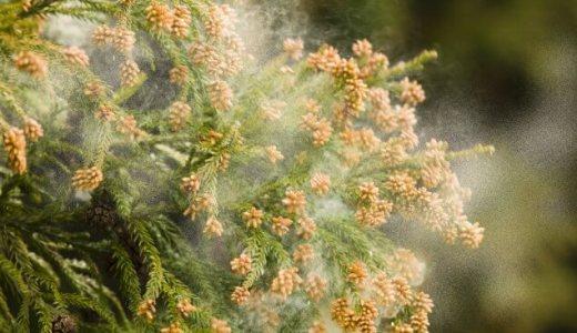 希望の党の公約「花粉症ゼロ」どうやって0にする?やり方、方法は?杉、檜、稲、ブタクサを伐採(なくす)?【ユリノミクス、小池百合子、12のゼロ】