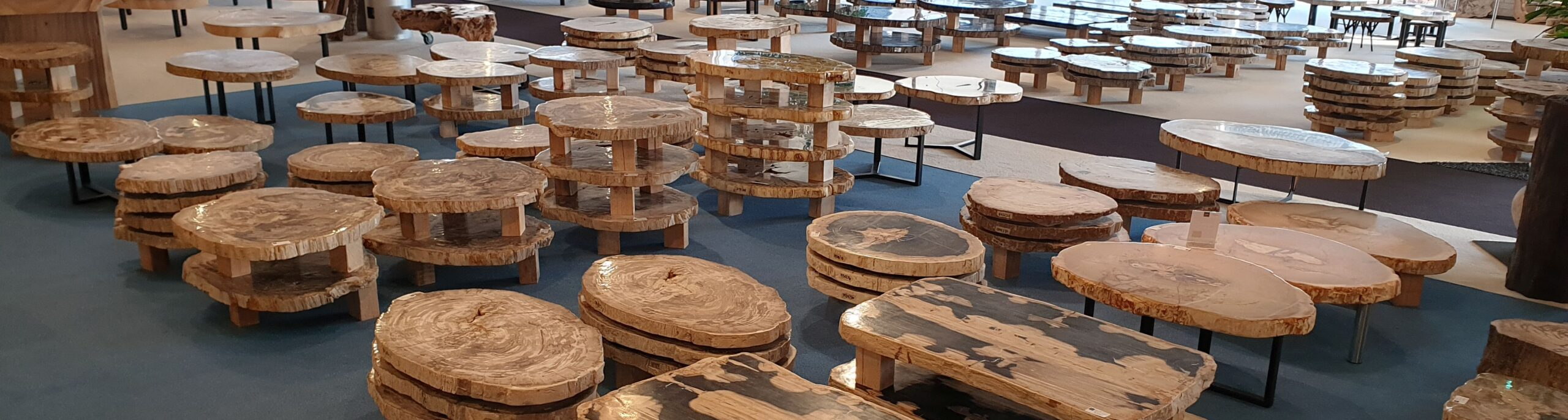 petrified wood xyleia natural interiors