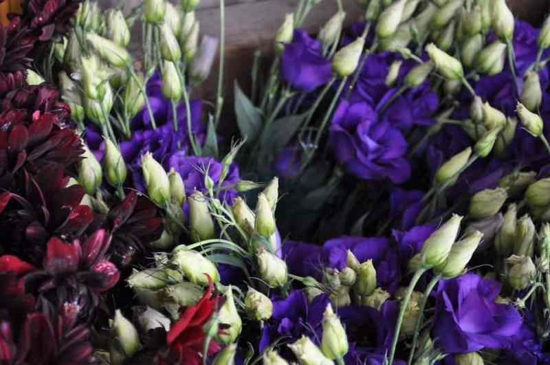 spring flowers at the market