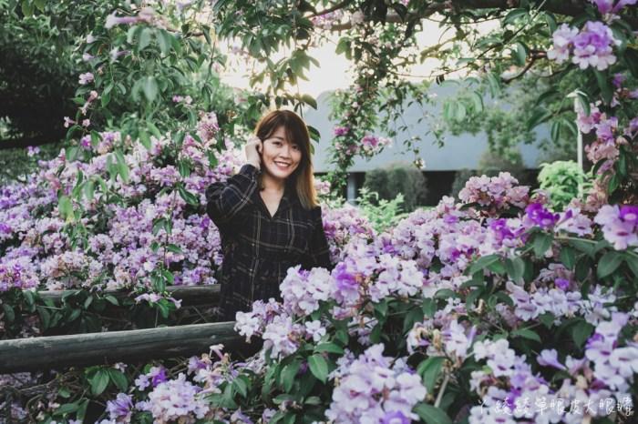 新竹網美拍照打卡景點推薦!新竹竹北新瓦屋季節限定的蒜香藤滿開,花期只有一週!快來拍美炸的紫色瀑布